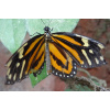 Butterfly 6<div class='url' style='display:none;'>/kg/laupen/</div><div class='dom' style='display:none;'>kirchenregion-laupen.ch/</div><div class='aid' style='display:none;'>3956</div><div class='bid' style='display:none;'>11080</div><div class='usr' style='display:none;'>10967</div>