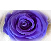 flower 4<div class='url' style='display:none;'>/kg/laupen/</div><div class='dom' style='display:none;'>kirchenregion-laupen.ch/</div><div class='aid' style='display:none;'>3732</div><div class='bid' style='display:none;'>9654</div><div class='usr' style='display:none;'>10967</div>